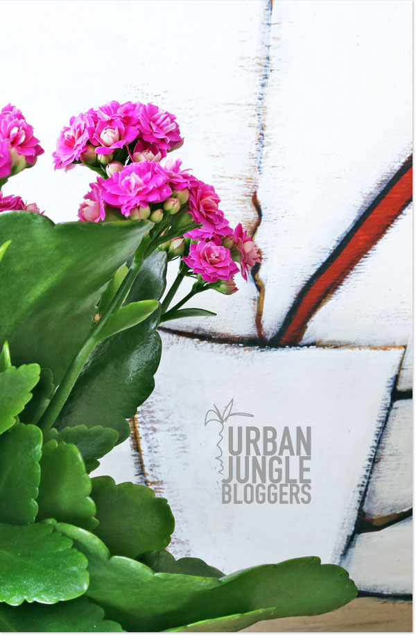Plants & Cappuccino - Urban Jungle Bloggers