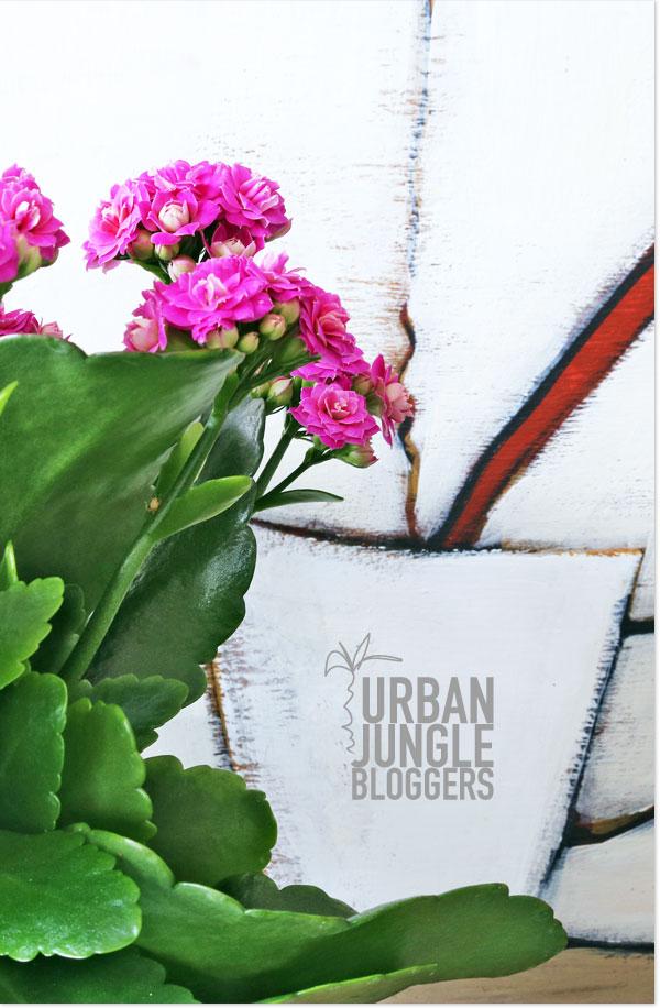 Urban-Jungle-Blogger_designhaus_no9_1