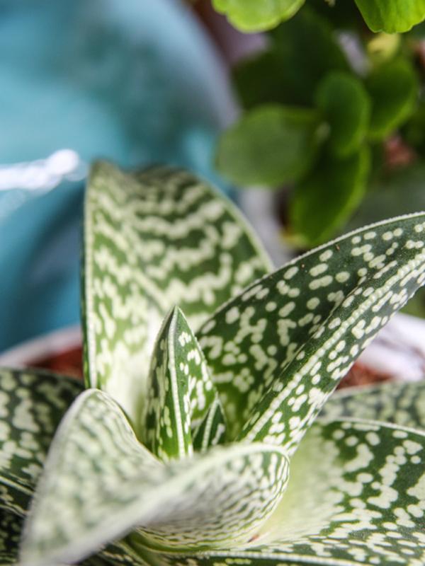 Plants & Art | Urban Jungle Bloggers