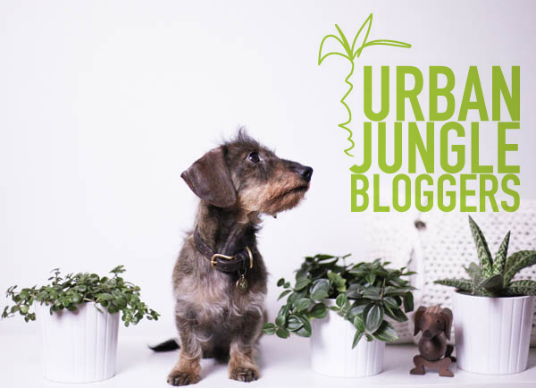 Urban_Jungle_Bloggers_Jungle_animals_designhausno9_4