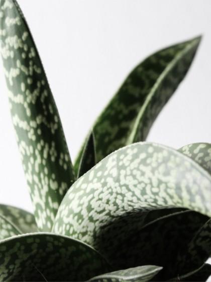 Botanical_zoom_UJB_designhausno9