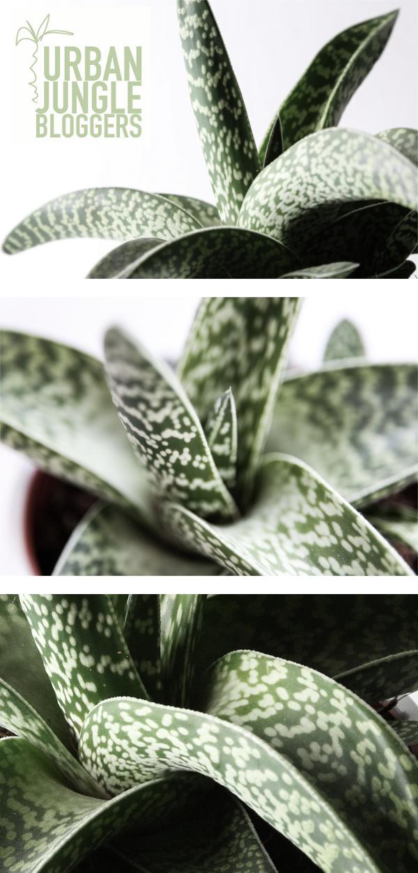 Botanical_zoom_UJB_designhausno9_2