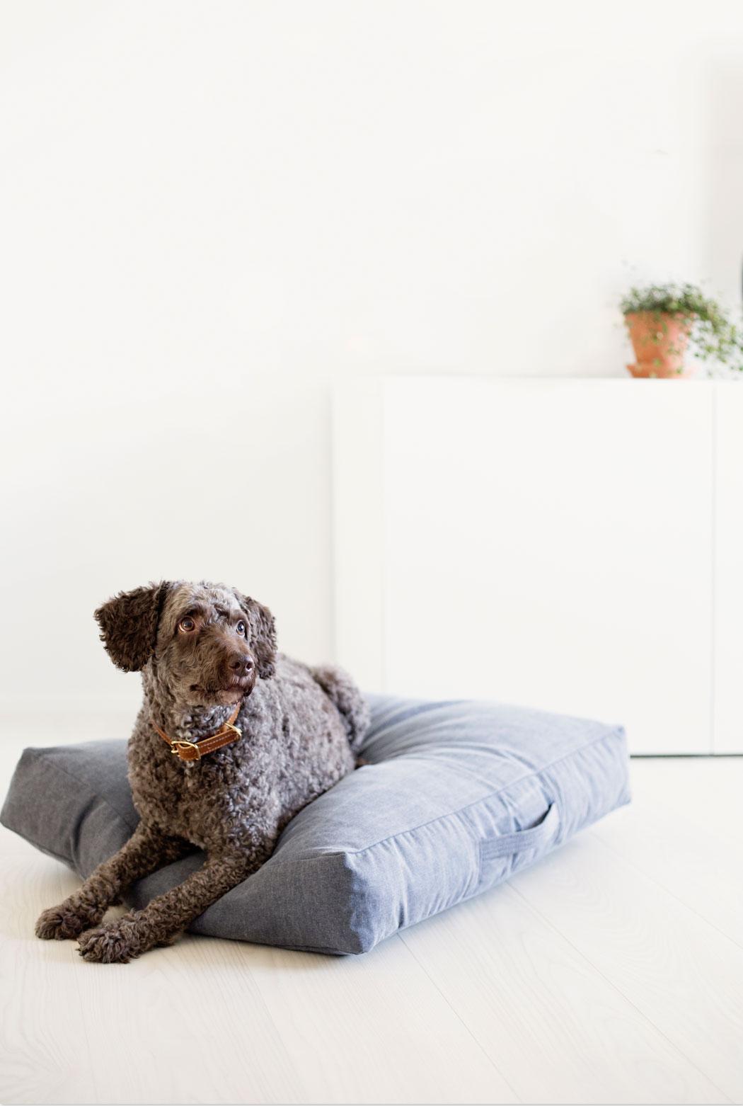 Chic wohnen mit Hund - Kind for Dogs