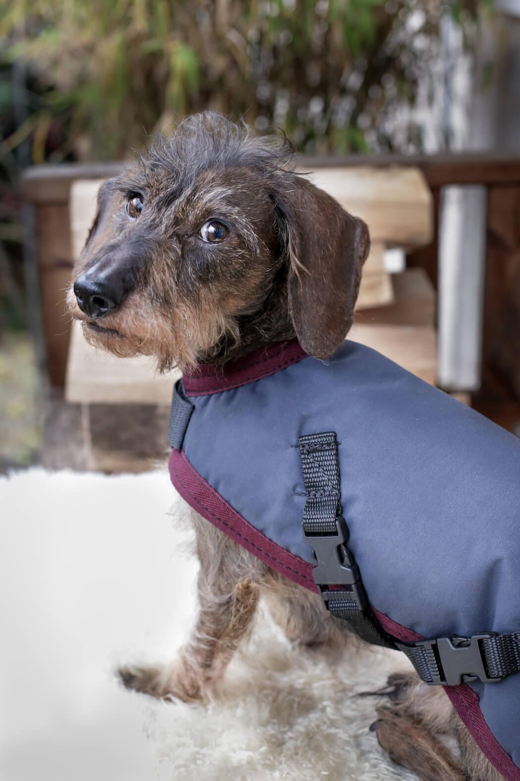 Hunde Strickpullover oder Mantel - Was braucht deiner?