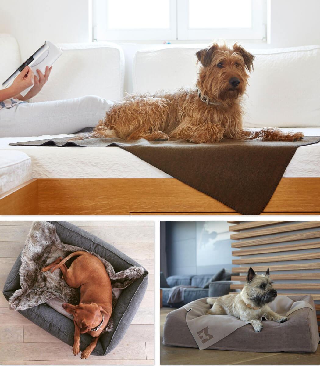 Exklusives Hundezubehor Wie Deine Einrichtung Noch Schoner Wird