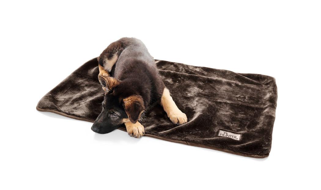 Sidi hat ein neues Hundebett