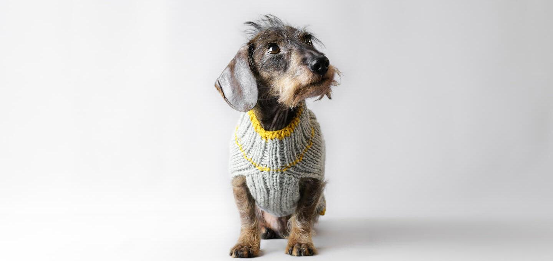 Sidi's Hundepullover jetzt auch für deinen Dackel
